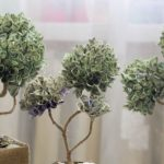 38777259 - photo of money trees made with dollars