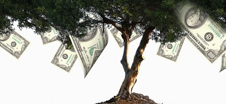 Banner – Money Tree